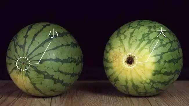 水果焦点图素材
