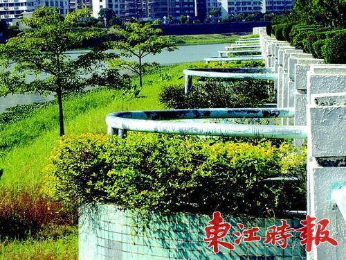 0多个长期枯萎的花坛已种上新苗,江边的绿化环境得到很大改善. -