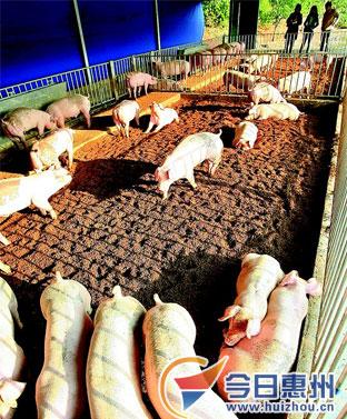 一百平米猪栏设计图