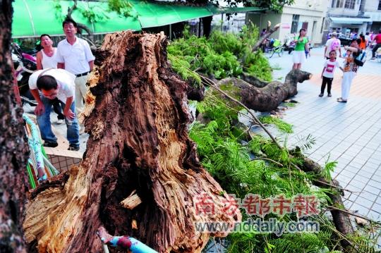 幼儿园老师们称,每年树木生长旺盛季节,园里工作人员都会拿着自制的高