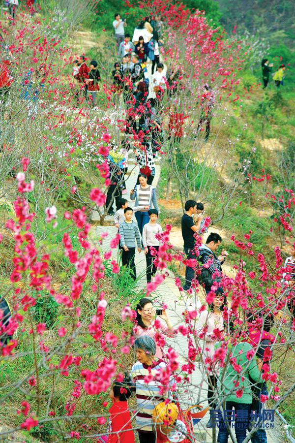 市区红花湖桃花岛上,桃花迎春绽放