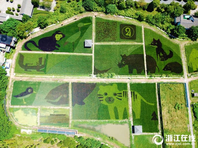 8月28日,航拍杭州西溪湿地创意农耕文化园,10余种动物的卡通形象在