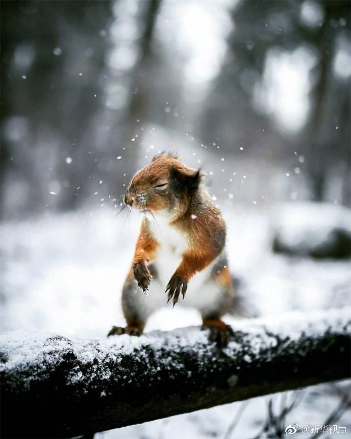 芬兰摄影师与探险家Joachim Munter,拍摄了一组童话般的森林动物图片。为了赢得动物的信任,他花费了大部分时间来与他们相处。所以你才会发现,这些小动物在他的镜头前,都自然得如同在自家撒欢儿的你家主子。(顶尖摄影观赏)