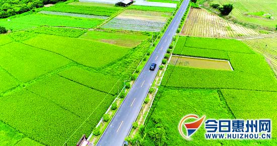 """惠州市围绕""""四好农村路""""要求推进农村公路建设"""