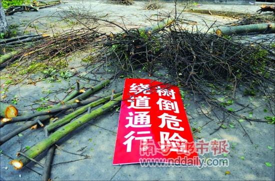 随着木棉树被砍断,这块警示牌也失去了作用.