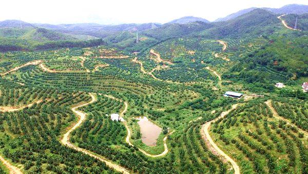 yabovip22首個國家森林康養基地出爐!原來在這里…