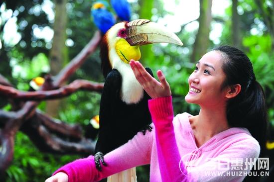 东莞香市动物园红颈袋鼠产子