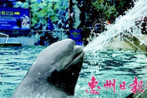 海豚表演滑稽有趣