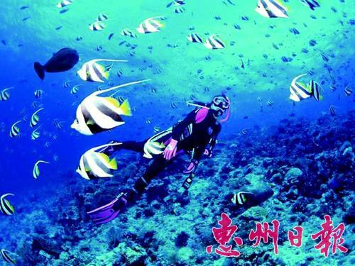潜水看神奇的海底世界