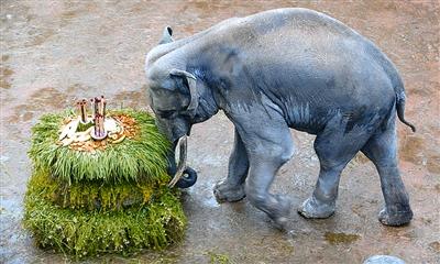 2000市民到长沙动物园为大象帕买庆生(图)