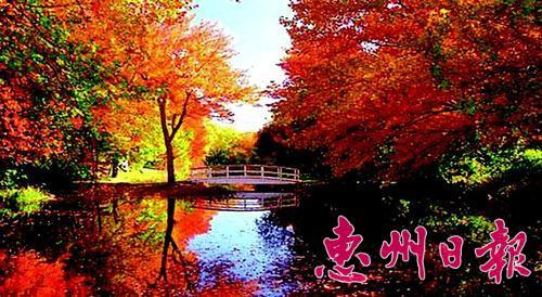 北京香山红叶美景.图片