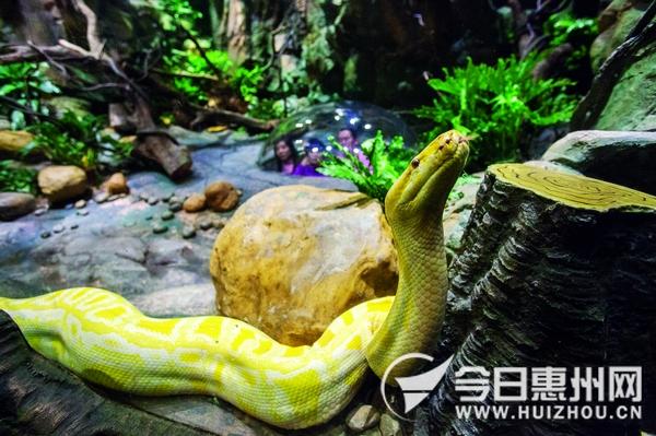 全球最大生态主题蛇园广州开园