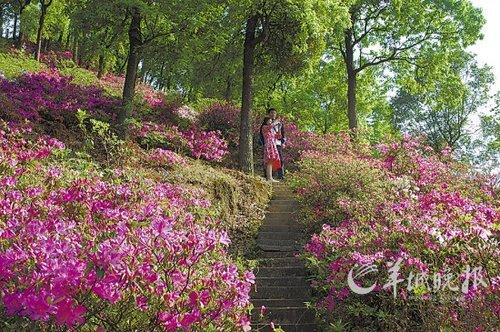 作为著名风景名胜区,七星岩,鼎湖山内拥有着众多甚具岭南特色的奇花