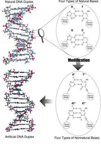 细胞的结构和功能框架图