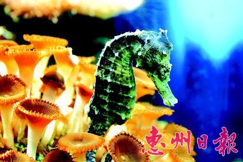 观众可以一睹这些可爱的海洋动物运动员们炉火