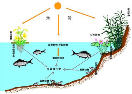 生态浮岛示意图