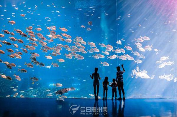 五月天晴,鲜花灿烂,你是否已迫不及待地想投入蓝色海洋的怀抱?到珠海长隆畅享独一无二的蓝色梦幻之旅吧!五月来到海洋王国,除了享受这里清爽澄澈的湛蓝,众多深海里的、极地里的、淡水里的动物明星外,还能收获独特的海洋动物科普知识!看了湖南卫视2015年全新原创节目《奇妙的朋友》,是不是很想像明星们那样,与白鲸、鲸鲨、海狮海象等海洋萌宠们欢乐互动,亲身体会海洋动物和人类的纯净情感呢?五月来横琴长隆海洋王国,你也能享受明星之旅,与各种海洋动物来个全接触!    在白鲸馆向世界最大的白鲸种群问好   珍稀的白鲸主要